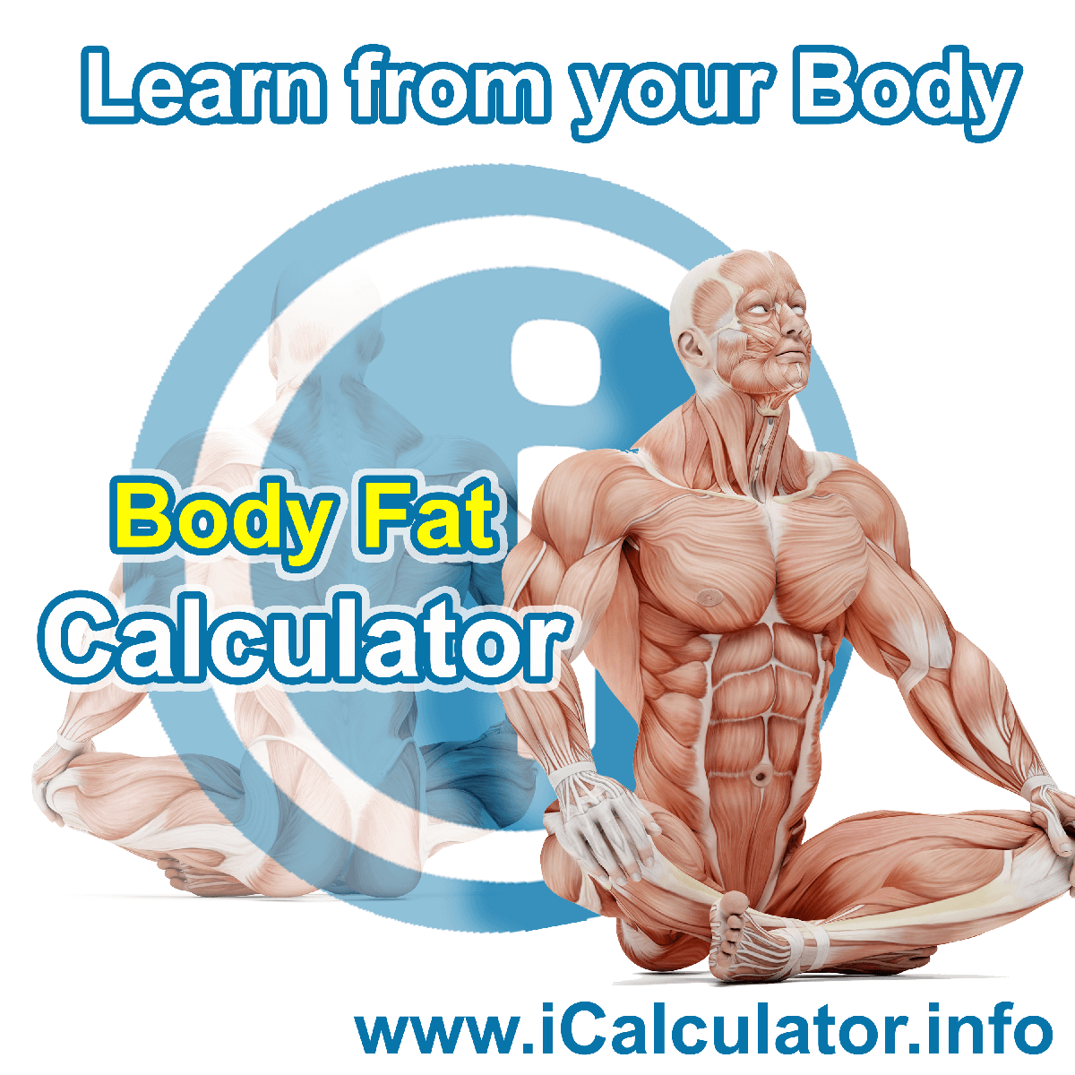 Body Fat Calculator. This image shows the Body Fat formula for the Body Fat Calculator